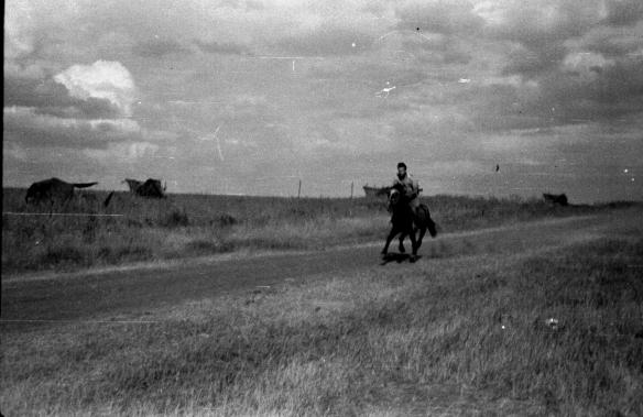 Eugenio Corti a cavallo